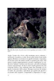 Parte seconda [file.pdf - 11.4 Mb] - SardegnaAmbiente
