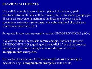 REAZIONI ACCOPPIATE Una cellula compie lavoro: chimico (sintesi ...