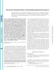 Structural characterization of Bordetella parapertussis lipid A