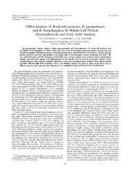 Differentiation of Bordetella pertussis, B. parapertussis,