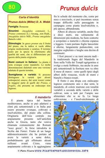 Prunus dulcis (Miller) - Piante spontanee in cucina