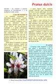 Prunus dulcis (Miller) - Piante spontanee in cucina - Page 2