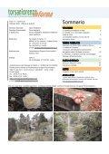 Vivaismo Verde Pubblico Paesaggismo - Torsanlorenzo Gruppo ... - Page 2