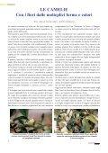 Vivaismo Verde Pubblico Paesaggismo - Torsanlorenzo Gruppo ... - Page 4