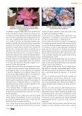 Vivaismo Verde Pubblico Paesaggismo - Torsanlorenzo Gruppo ... - Page 5