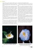 Vivaismo Verde Pubblico Paesaggismo - Torsanlorenzo Gruppo ... - Page 6