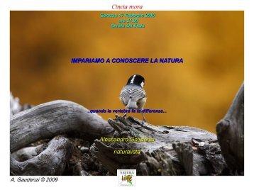 Ordine Urodeli - Alessandro Gaudenzi