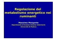 Regolazione del metabolismo energetico nei ruminanti