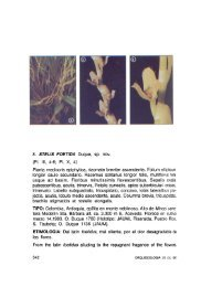 Orquideología 20(3): 342–343, pl. 10, 4 - Epidendra