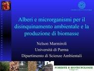 Alberi e microrganismi per il disinquinamento ambientale e la ...