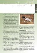 Caccia - Associazione Cacciatori Bellunesi - Page 7