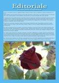 numero 7 - Giardinaggio indoor - Page 4