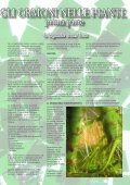numero 7 - Giardinaggio indoor - Page 5