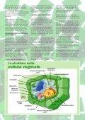 numero 7 - Giardinaggio indoor - Page 6