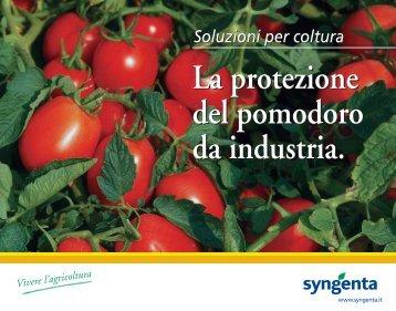 Protezione pomodoro
