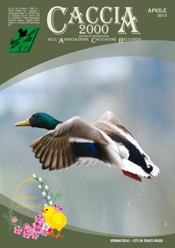 Aprile 2013 [pdf 11,4mb] - Associazione Cacciatori Bellunesi