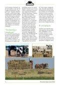 giornalino - Noi e il cavallo - Page 4