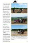 giornalino - Noi e il cavallo - Page 7