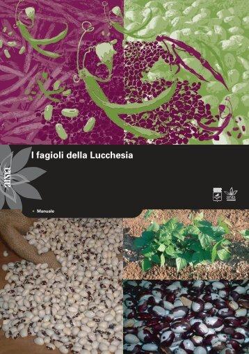 Fagioli_lucchesia
