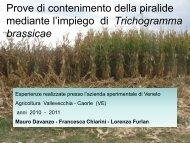 Sperimentazioni sul controllo di piralide - Veneto Agricoltura