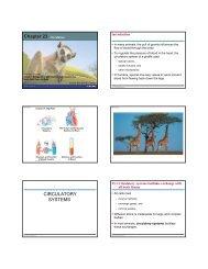 Chapter 23 Circulation CIRCULATORY SYSTEMS
