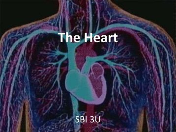 The Heart - SBI 3U: Biology