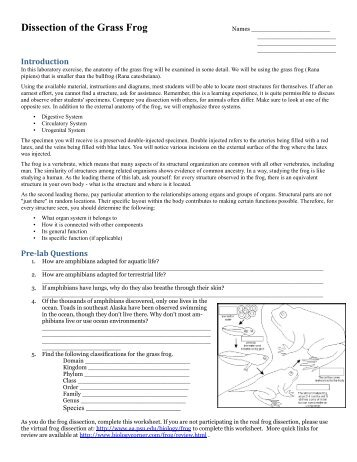 frog dissection lab report pdf