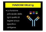 FUNZIONE DELLE Ig - Cuteri.eu