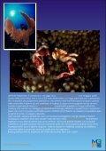 Marine Program Appunti di ecologia marina - Il Saturatore - Page 7
