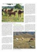 Pferd 3-2010.pdf - Page 7