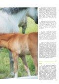 Pferd 2-2011.pdf - Page 5