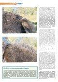 Pferd 1-2011.pdf - Page 6