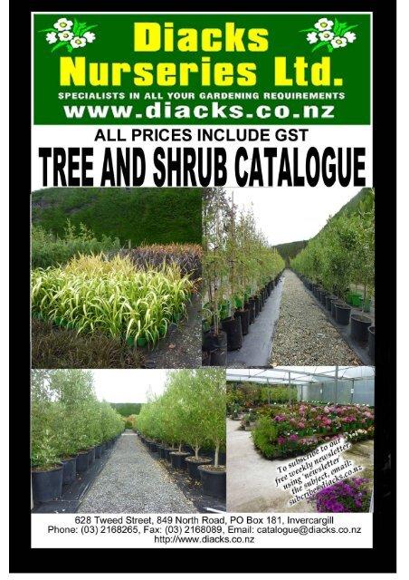 Salix Caprea Pendula Kilmarnock Willow Approx 1.2M tall