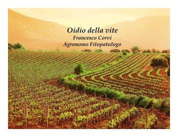 05 - Oidio della vite (F. Corvi) - Cerexagri