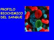 sangue - Farmaciaunina2.it