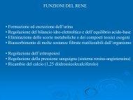 FUNZIONI DEL RENE • Formazione ed escrezione dell'urina ...