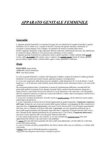 APPARATO GENITALE FEMMINILE - Osteopatiafirenze.It