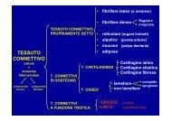2009-10 Tessuto connettivo - Sangue e linfa F+CTF - ImageShack
