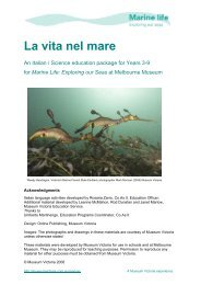 La vita nel mare - Teacher notes ... Resources - Museum Victoria
