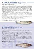pesce - Aiab Veneto - Page 7