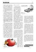 racoon-archivio-Dicembre-2004 - Page 7