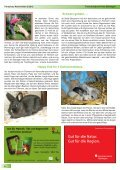 hier - Tierheim Böblingen - Seite 6