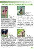 hier - Tierheim Böblingen - Seite 7