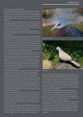 TierSchutzMagazin NR. 12 hier als PDF-Datei öffnen oder speichern. - Seite 7