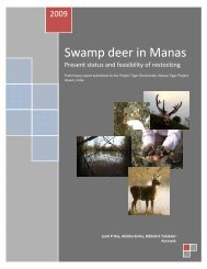 Swamp deer in Manas Jyoti - Aaranyak