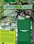 Lebensraum Baum - Seite 6