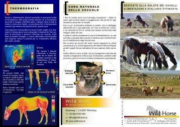 Wild Horse Wild Horse
