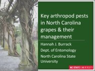 Key arthropod pests in North Carolina grapes & their management