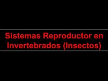Sistemas Reproductor en Invertebrados (Insectos)