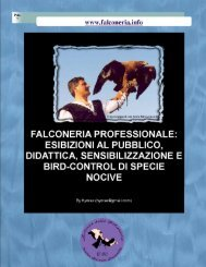 Falconeria professionale: esibizioni al pubblico ... - Falconeria.info